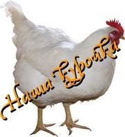 Курица разделка опт окорочка филе бедро крило сердечки печень жылудки
